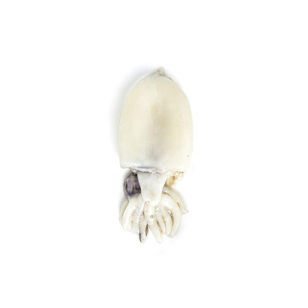 Sepia/Cuttlefish 200-400 grams