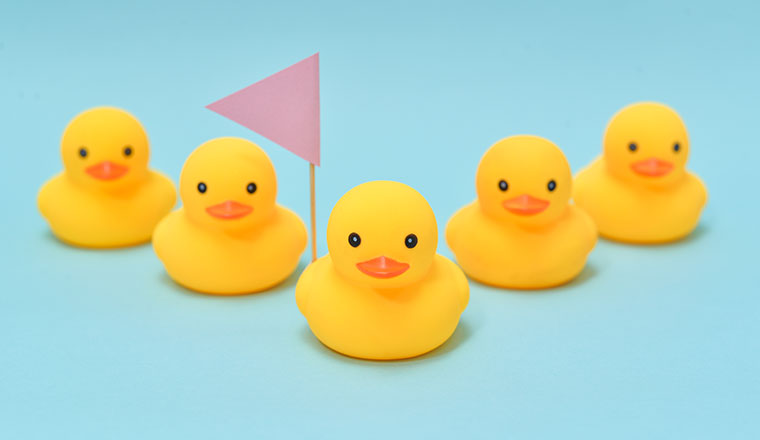 A picture of the team leadership concepts with ducks