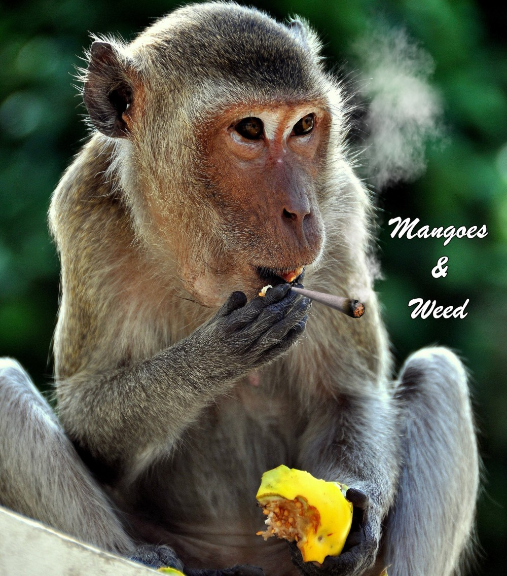 MANGOES AND WEED