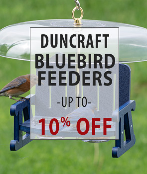 Up to 10% Off Bluebird Feeders!