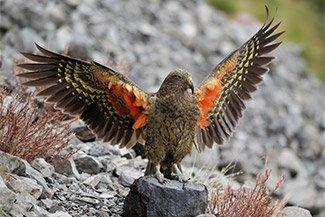 Do parrots control probability?
