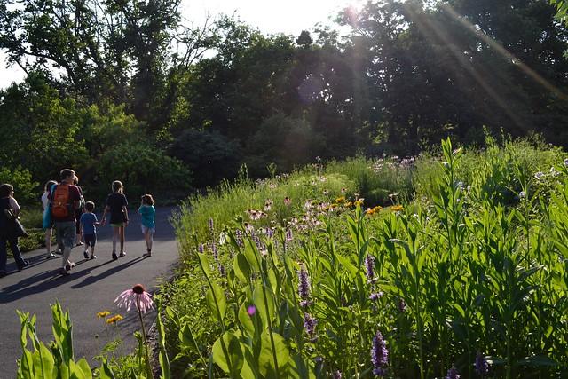 A family walking through a garden