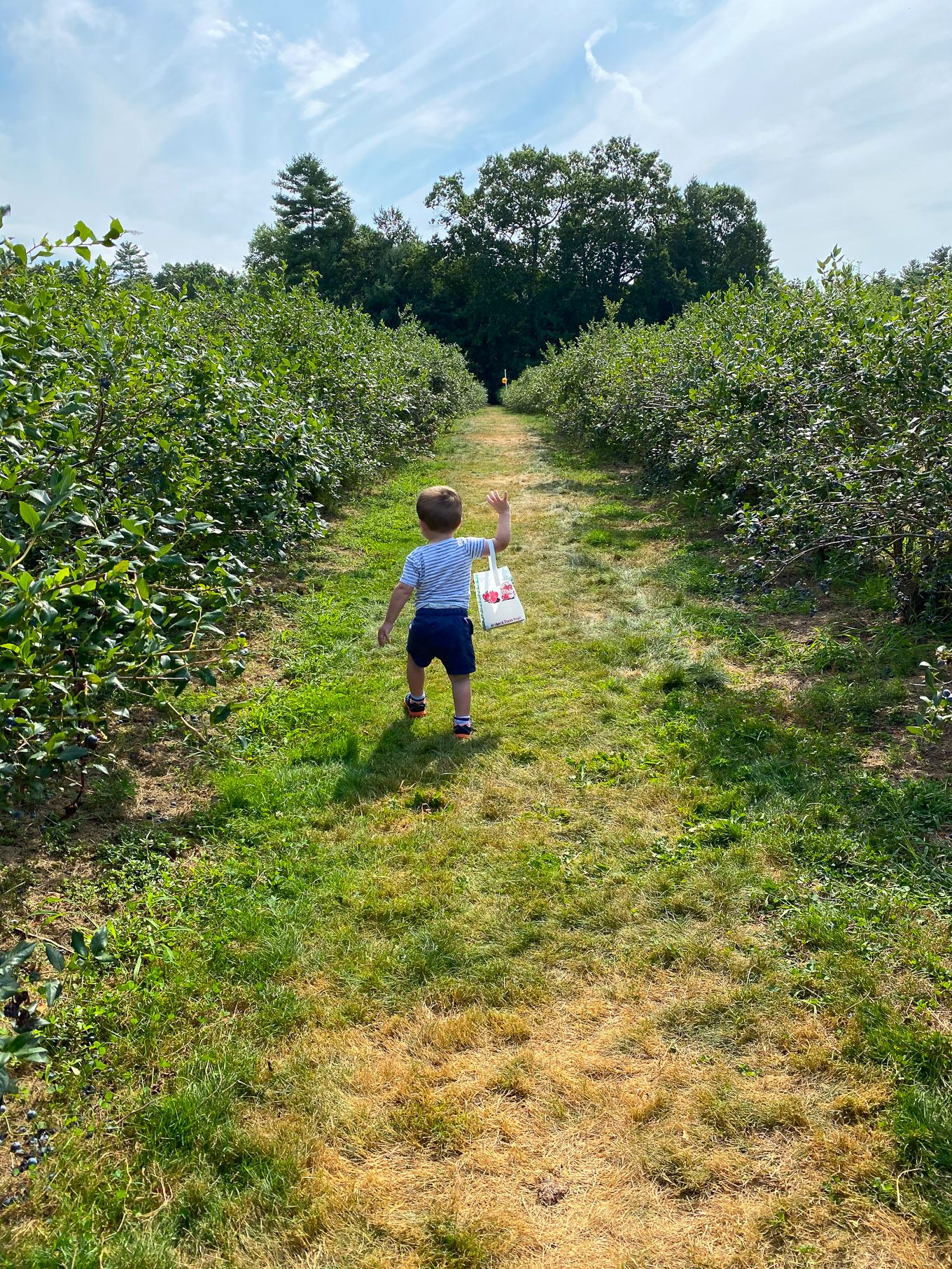James blueberry picking