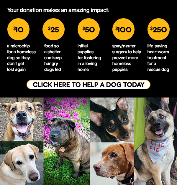 Click Here to Help a Dog Today