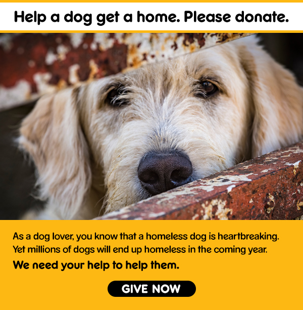 Help a Dog Get a Home. Please Donate.