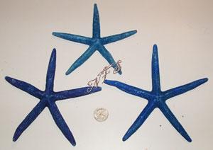 Blue Pencil Starfish
