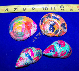 X Large Painted Hermit Crab Shells