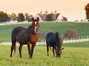 Horse Country, Lexington