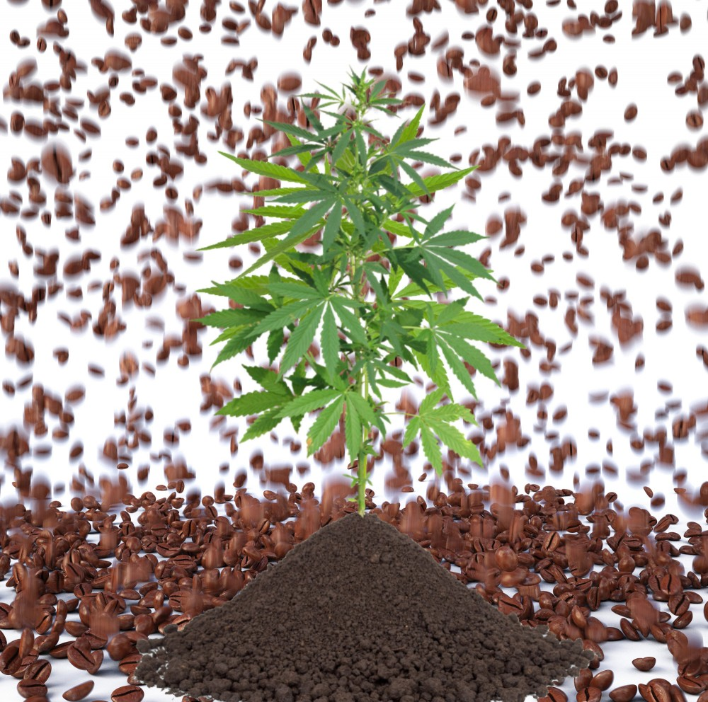 COFFEE GROUNDS FOR MARIJUANA PLANTS
