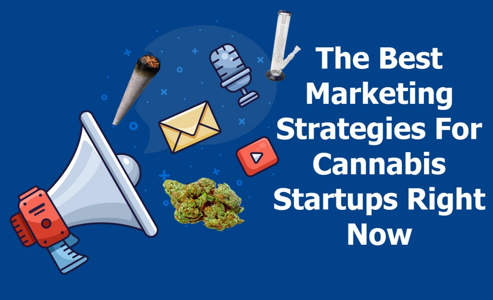 STARTUP MARKETING FOR CANNABIS