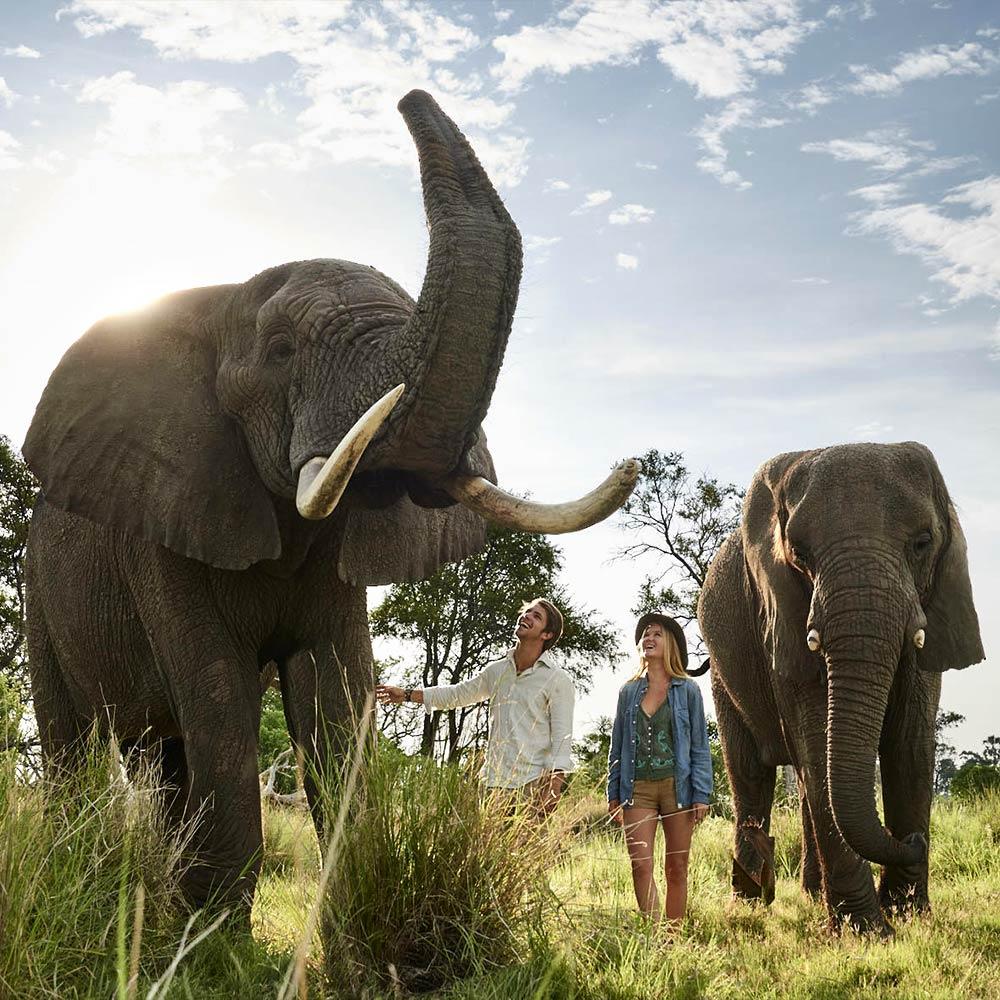 [walking with elephants]