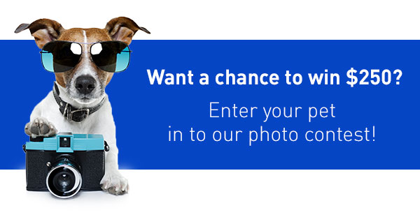 Enter your pet in your photo contest!