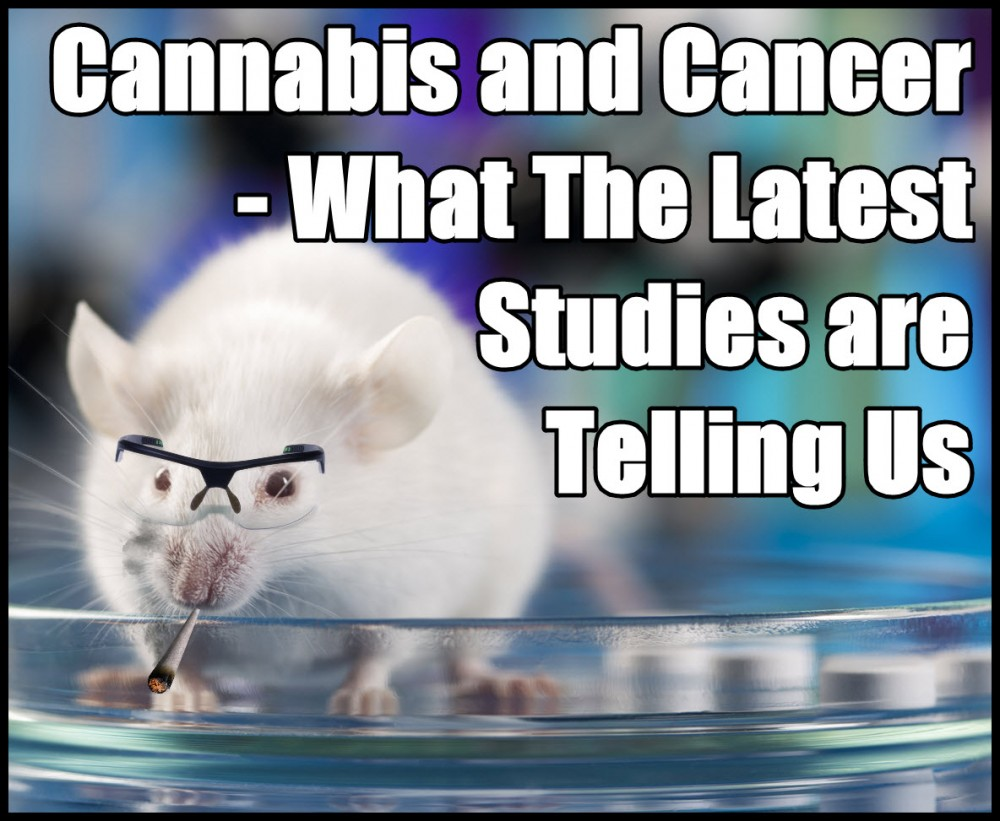 cannabis for cancer the latest studies