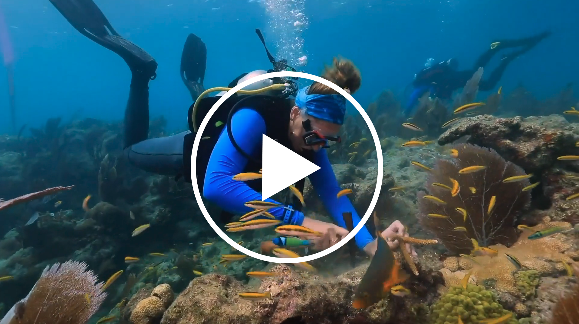 [VIDEO] What's happening to our coral reefs?