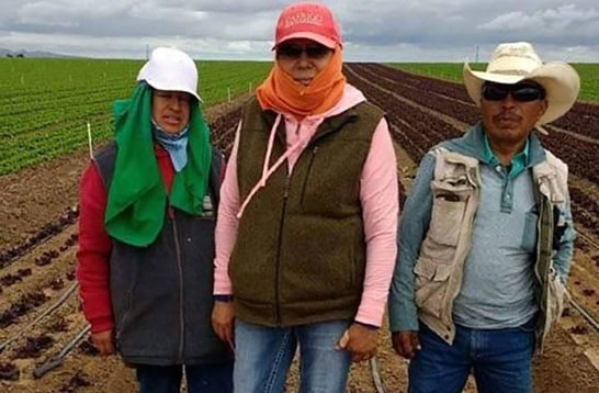 Farm workers. Three Latinx people standing in a field wearing hats and vests.