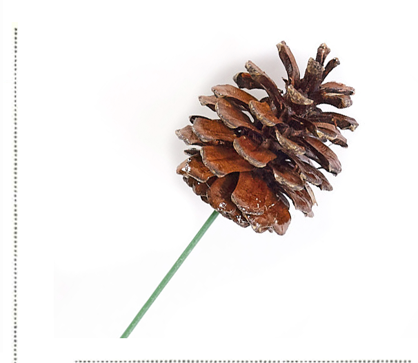 Natural Pinecone Pick