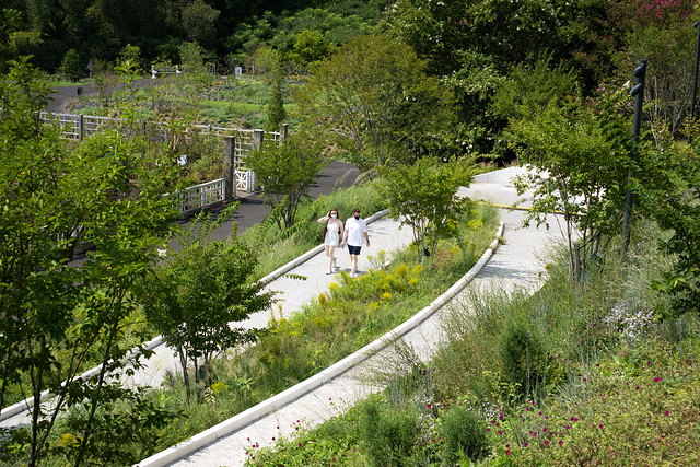 People on a winding path of flowers.