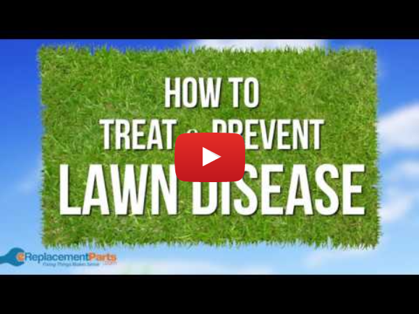 Lawn and Garden Tips: How to Treat and Prevent Lawn Disease | eReplacementParts.com