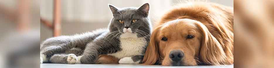 pets-banner