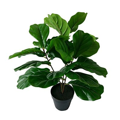 Potted Fiddle Leaf Tree 22x22x24