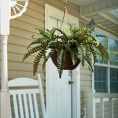 Faux Boston Fern Hanging Natural and Lifelike Artificial Arrangement and Imitation Greenery with Basket