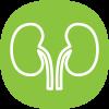 Icon of kidneys