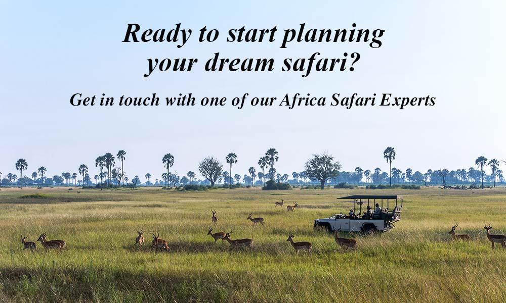 Ready to Start Planning Your Dream Safari?