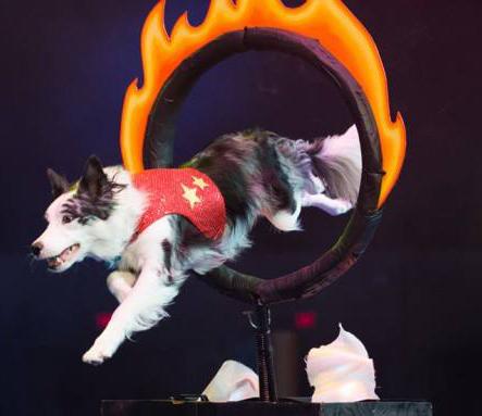 dog talent show