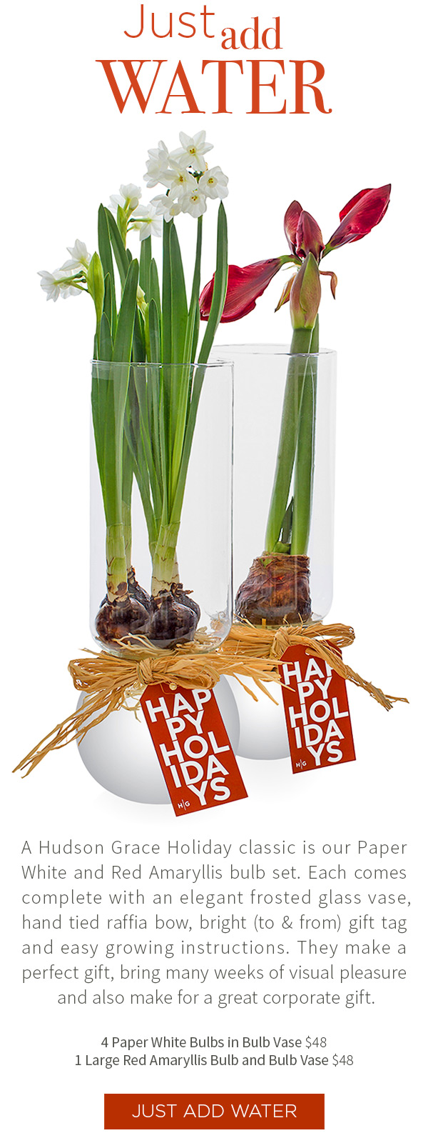 Just Add Water. A Hudson Grace Holiday classic is our Paper White and Red Amaryllis bulb set. Each comes complete with an elegant frosted glass vase, hand tied raffia bow, bright (to & from) gift tag and easy growing instructions. They make a perfect gift, bring many weeks of visual pleasure and also make for a great corporate gift. 4 Paper White Bulbs in Bulb Vase $48 .?1 Large Red Amaryllis Bulb and Bulb Vase $48
