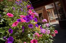 Chesterfield's digital flower festival - Grow and Tell