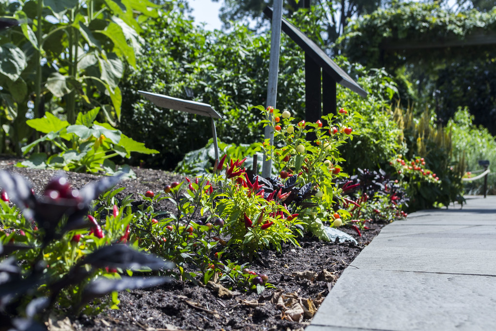 Garden with peppers.