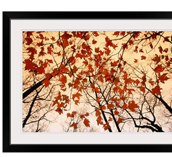 A skyward view of the bare branches and autumn leaves, Russell-Brasstown scenic highway, Chattahoochee National Forest, Georgia by Raymond Gehman