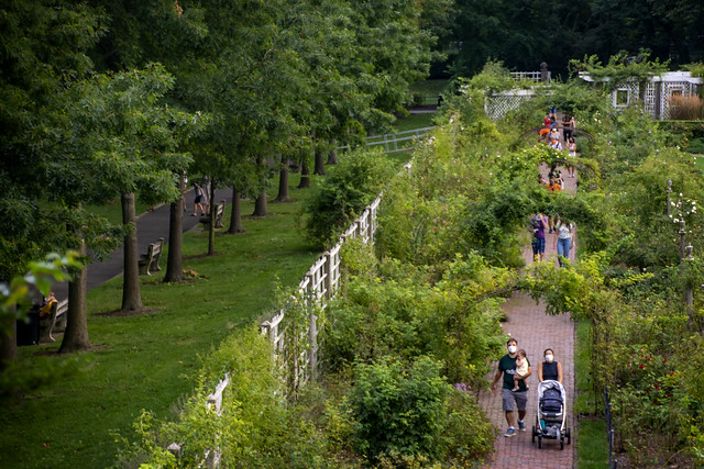 People walking through a path in a garden.