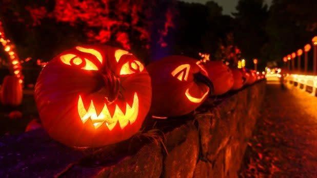 pumpkins at the Great Jack O''Lantern Blaze