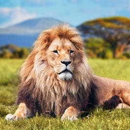 Lion of Sarafi