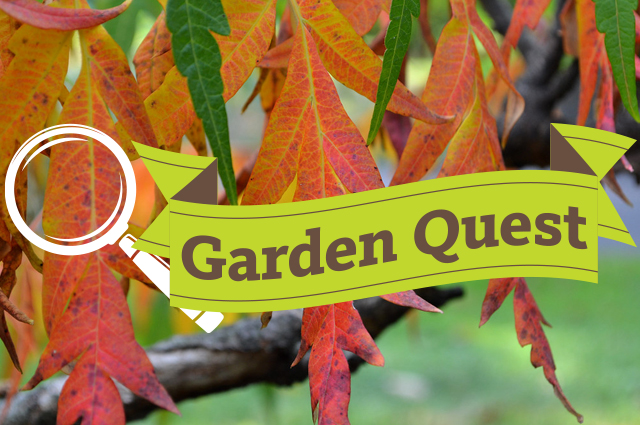 "A close-up photo of autumn leaves and the words ""Garden Quest"" in a banner illustration."