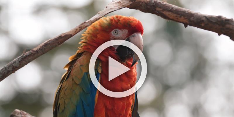 Birdland and Jurassic Journey
