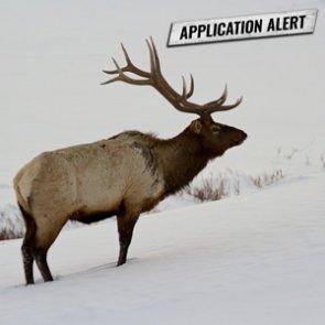 Montana app deadline