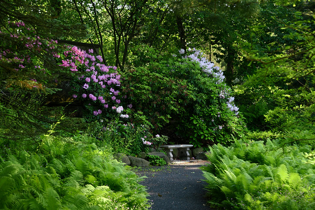 Garden path with purple flowers and sitting bench