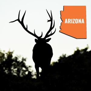Arizona bonus points