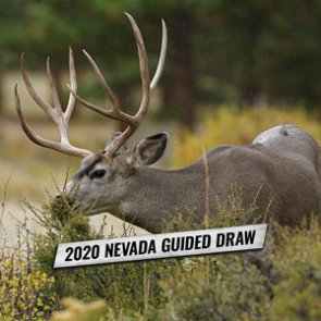 Nevada guide draw