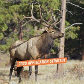 Arizona elk application strategy