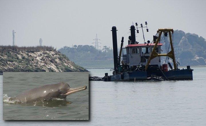 dolphin activity