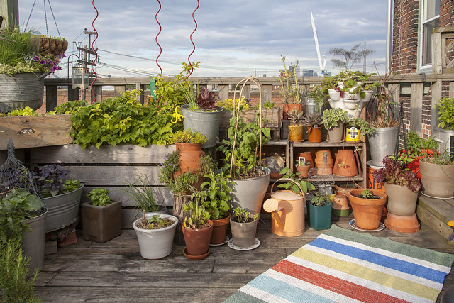 Assorted plants in containers on a rooftop
