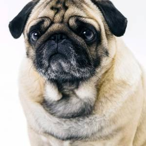 dog-license-scam-jpg_4-348626_20191217154126.jpg