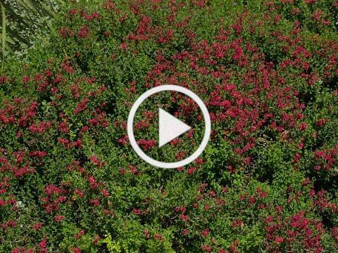 Best spring pruning tips | Robbi Will | Central Texas Gardener