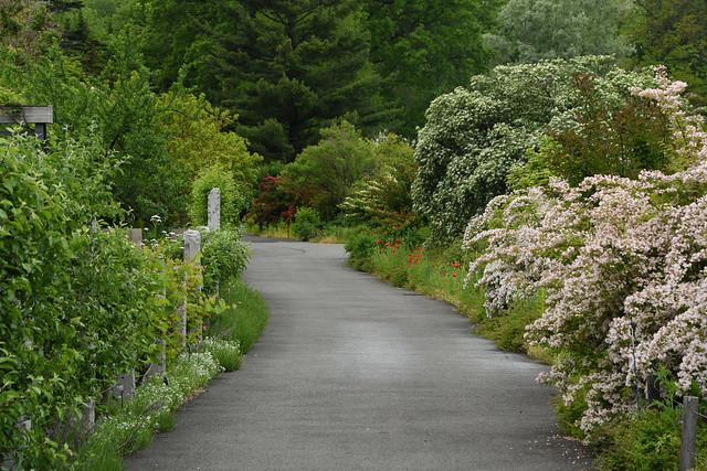 An empty path through a garden