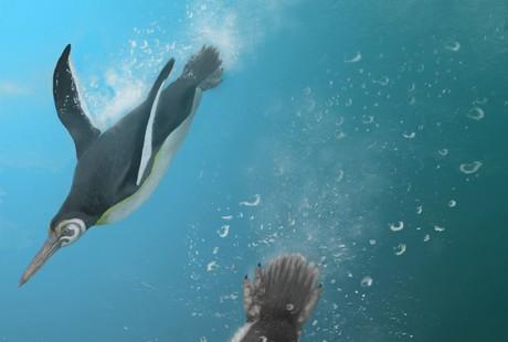 Image: The missing link in penguin evolution