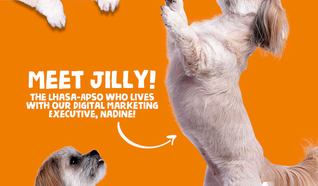 Meet Jilly!
