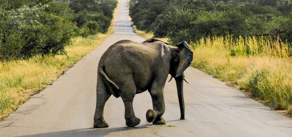 gray elephant on concrete road